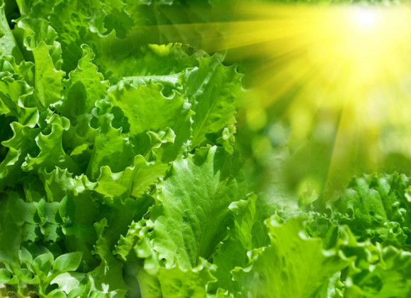 Chlorophyll: The Miracle of Nature