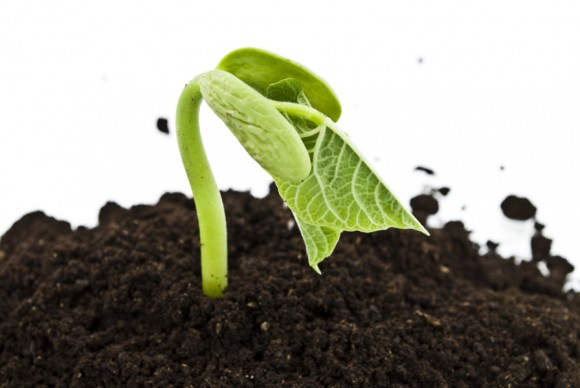 Organic vs conventional produce: It's all in the soil