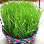 grass-basket